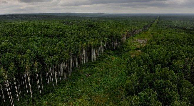 Remoção de árvores para construção de oleoduto em Alberta; província se queixa de descaso por parte do governo federal