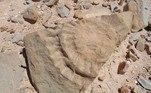 Cientistas chilenos encontram fóssil de um pterossauro no AtacamaVEJA MAIS