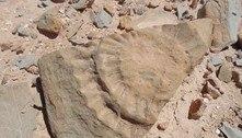 Cientistas chilenos encontram fóssil de um pterossauro no Atacama