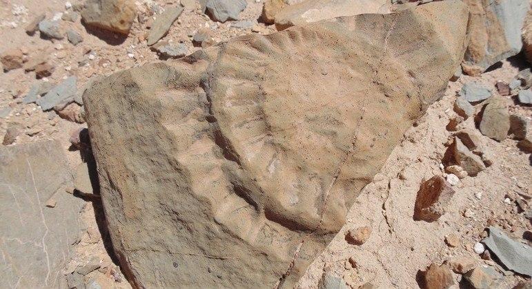 Pterossauro habitou a Terra há cerca de 160 milhões de anos atrás