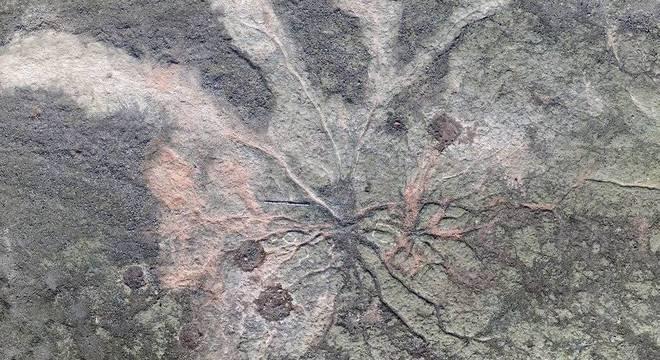 Berry Local descoberto tem raízes muito longas que representam uma transformação na forma com que as plantas e o solo recolhem água