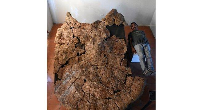 O fóssil mostra que a tartaruga era muito maior que os homens
