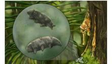 Fóssil raro é encontrado em âmbar de 16 milhões de anos