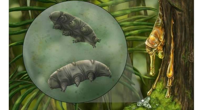 Fóssil de tardígrado foi encontrado em um âmbar dominicano de 16 milhões de anos