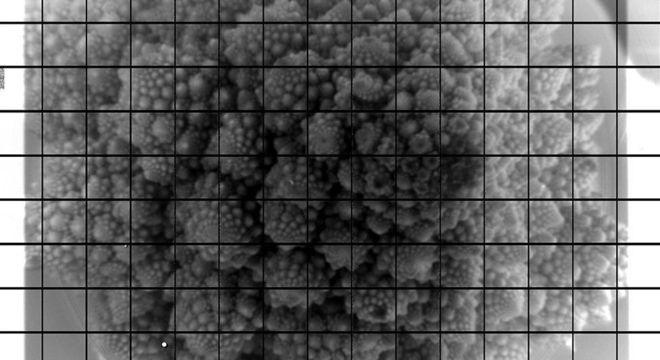 A cabeça de um brócolis romanesco foi captada nos 3.200 megapixels da câmera do Observatório Vera Rubin