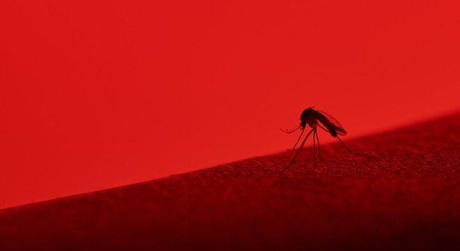 SAUDE – Mayaro: o que se sabe e o que falta saber sobre o novo vírus transmitido por mosquitos que pode estar circulando no Rio