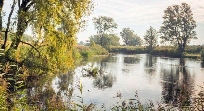 Ameba pode ser encontrada em lagos e zonas úmidas