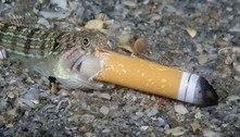 Fotógrafo de peixe com cigarro revela: 'Me senti obrigado a intervir'