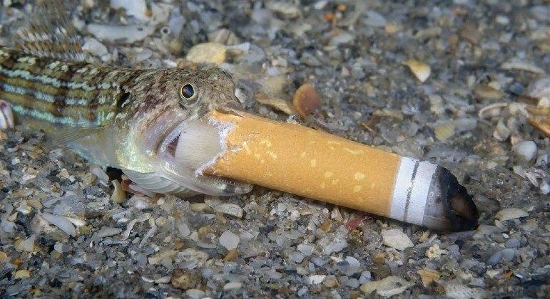 Fotógrafo de peixe com cigarro na boca disse ter salvo o animal da cilada