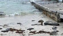 A foto dessa praia esconde um lesma-marinha altamente tóxica