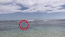 Foto mostra homem mergulhando pouco antes de ataque de tubarão