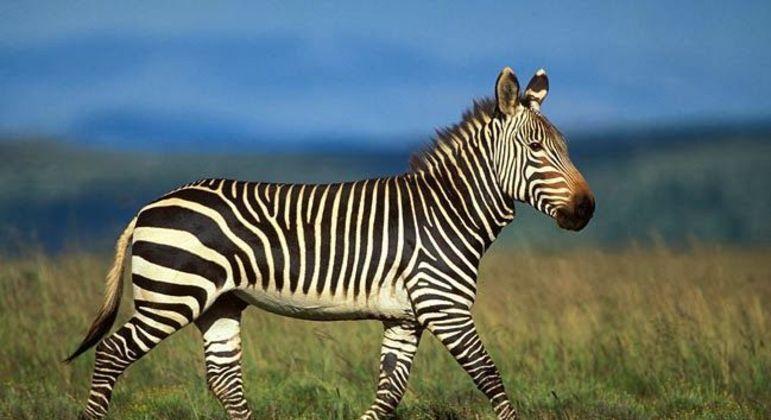 Fotografia de um animal para ilustração do item
