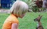Dois filhotes conversando