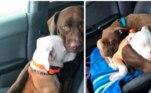 Dentre as imagens compiladas pelo site Bored Panda, eis uma história pra lá de especial. Daisy e Luna são duas cadelas inseparáveis, mas Daisy não gosta de andar de carro, então Luna a conforta até as duas pegarem no sono. Leal como só os cães conseguem ser