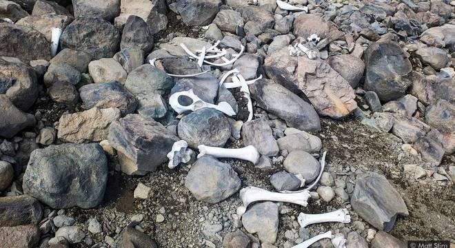 Fragmentos do esqueleto de um bisão americano, outrora preservados no gelo, também sugerem que esses animais já viveram em altitudes muito mais altas