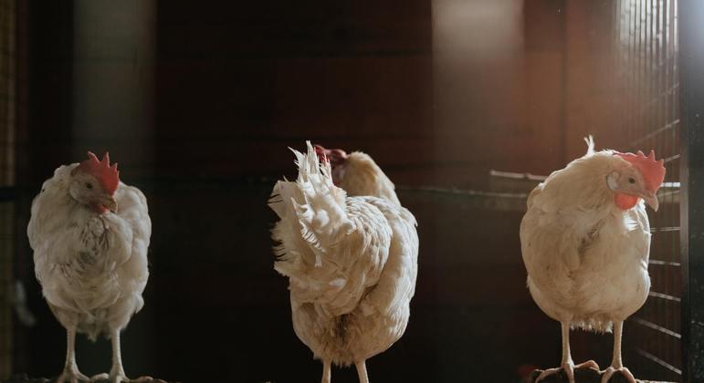 França eleva risco de gripe aviária para 'moderado' após detectar um caso