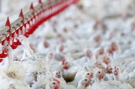China é o principal destino das exportações de frango