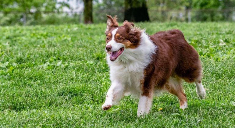 FRAPs: conheça os chamados Períodos Frenéticos de Atividades Aleatórias nos cães