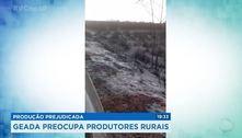 Produção prejudicada: geada preocupa produtores rurais