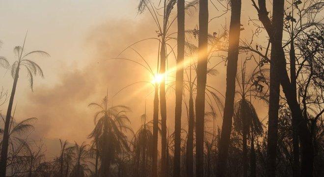 Importante área de preservação da biodiversidade no Pantanal, Serra do Amolar sofre com queimadas