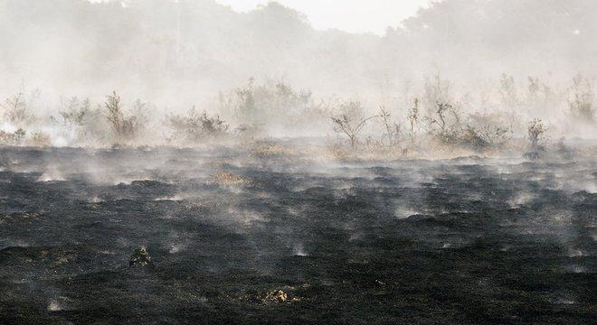 Uma das particularidades do Pantanal é que a biomassa, por cima ou por baixo do solo, ajuda a propagar o fogo com rapidez