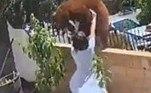 A jovemHailey Morinico, 17, ganhou os noticiários mundiaisapós empurrar uma ursa, que tentava invadir o quintal da casa onde vive, em Bradford, na Califórnia (EUA)