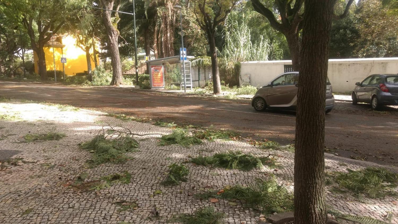Página do Twitter ajudou portugueses durante furacão Leslie
