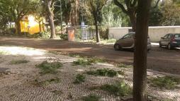 Página do Twitter ajudou portugueses durante furacão Leslie ()