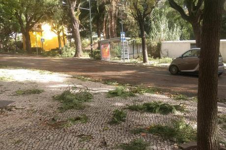 Coimbra foi a região mais afetada pelo furacão Leslie