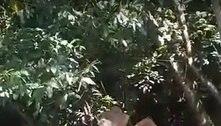 Vídeo mostra entregadores de app roubando macaco em Belém