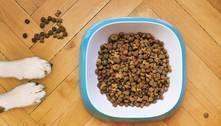 Juiz condena homem a pagar gastos com alimentação de cães com ex