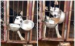 O vídeo, feito na China, se tornou viral graças à astúcia de Gou Za