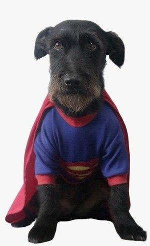 Gabriel foi encontrado nas ruas de Curitiba com cinomose e é o novo mascote do Instituto