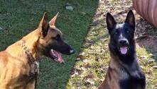 Conheça Gael e Hunter, os novos cães de fiscalização agropecuária