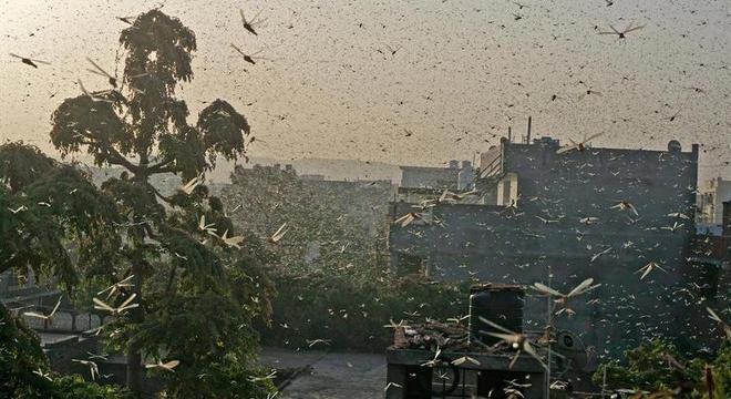 Nuvem de gafanhotos em Jaipur, na Índia: praga registrada em 4 continentes