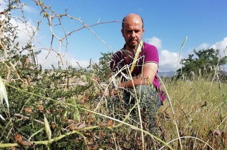 Gafanhotos destruíram 15 mil hectares na Sardenha