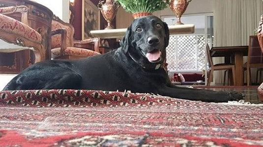 Cachorra arrastada por enxurrada no Rio de Janeiro é localizada (Arquivo Pessoal)