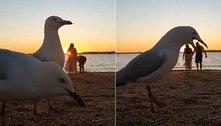 Gaivotas detonam vídeo romântico de casal com photobomb surreal
