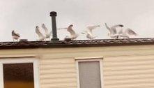 Mulher usa gaivotas para se vingar de vizinhos barulhentos