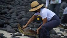 Rastreamento preserva a vida de animais marinhos em Galápagos