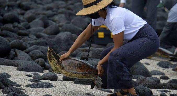 Especialistas em Galápagos estudam tartarugas e tubarões