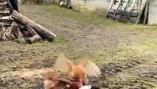 Dia da caça: galinhas se unem após ataque e colocam gato para correr