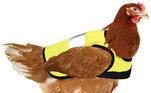 Para manter os birdies seguros, o proprietário comprou jaquetas de alta visibilidade