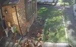 Um grupo de 25 galinhas cercou um entregador da Amazon durante um serviço no Canadá
