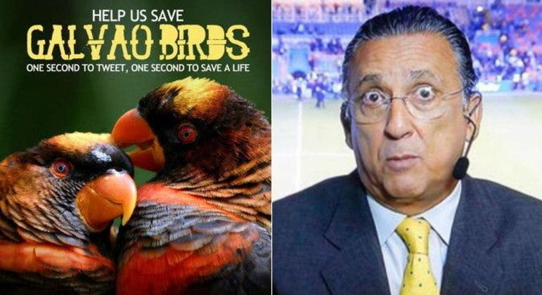 Galvão BuenoEm uma das pegadinhas mais famosas da internet brasileira, o narrador de futebol Galvão Bueno foi confundido com uma ave em extinção. Tudo aconteceu na Copa de 2010, quando a frase
