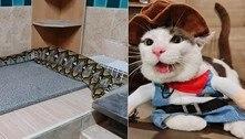Garotinha fica devastada ao saber que gato foi devorado por serpente