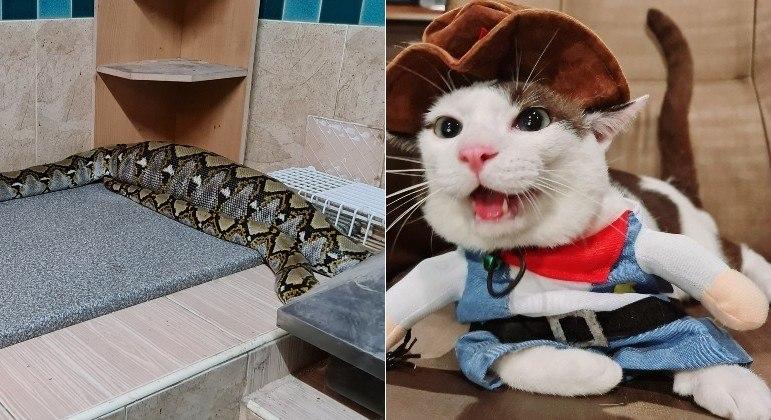 Garotinha de 11 anos encontrou serpente enorme em casa, após réptil ter devorado o gato dela