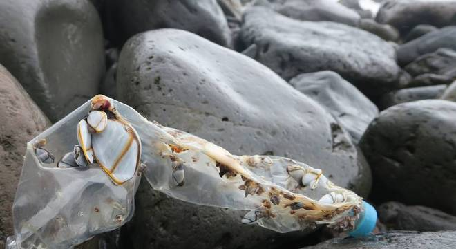 Na última década, o número de garrafas plásticas vindas China achadas na Ilha Inacessível disparou