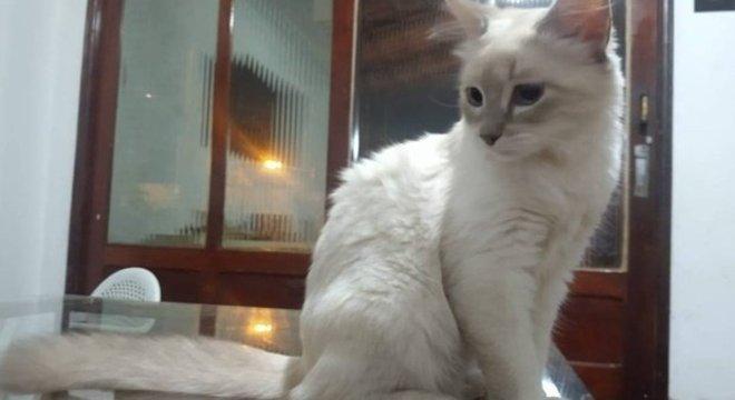 A gata é o primeiro animal a ter diagnóstico confirmado para o coronavírus no Brasil