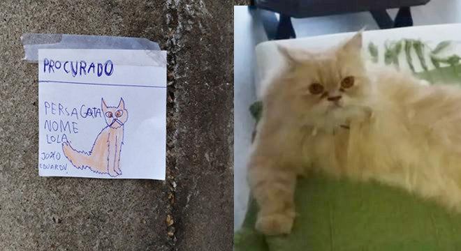 Lola é uma gatinha persa desaparecida em Blumenau (SC)